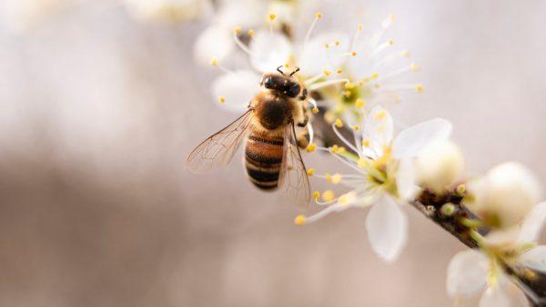 Arıların önemi her geçen gün anlaşılıyor