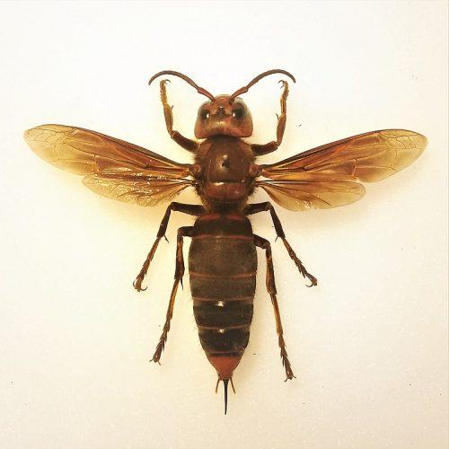 Arılara zarar veren zararlılar hakkında güzel bir yazı.